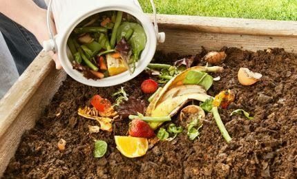 Food Waste - website